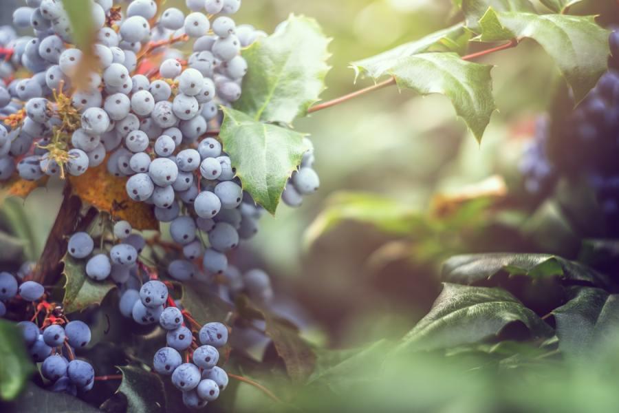 Grape Vines by Валерия on Unsplash
